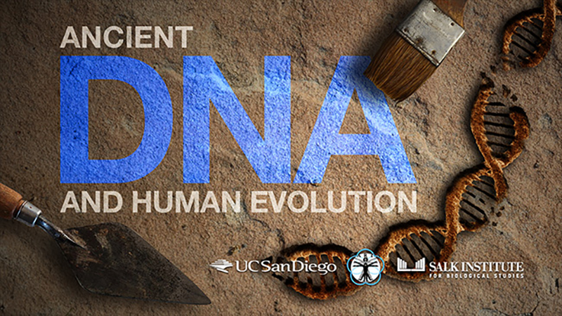 Ancient DNA and Human Evolution