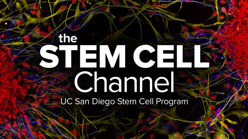 Stem Cell Channel
